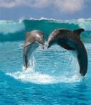 jump - Dolphin