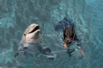 Rea & Dolphin - Dolphin (1 year)