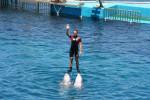 Dolphin - Dolphin (4 years)