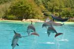 Dauphins Planète sauvage - Dolphin