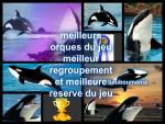 les beautés des océans - Orca Whale