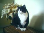 Gribouille - Cat