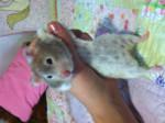 shakers - Hamster (4 years)