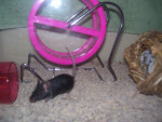 flash - Mouse (5 months)
