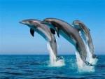 delfines - (1 year)