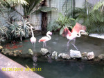 Flamant rose XD - (Other)