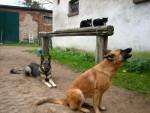 Tiergemeinschaft -