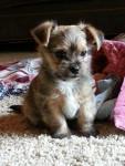 Sammy - Male (1 year)