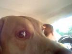 Pixie - (1 year)