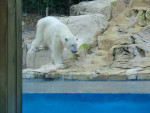 ours blanc -