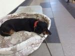 Puppy - (1 year)