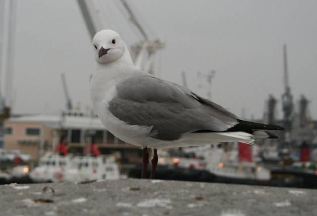 Gully -