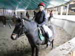 Kiwi - Male Pony (19 years)