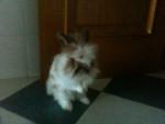 Buny - Male Rabbit (2 years)